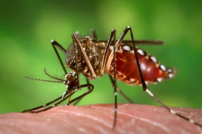 Dengue can be too Dangerous